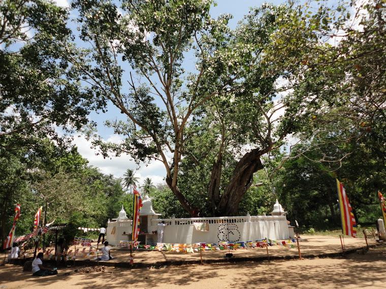 Hiriwadunna Bodhiya